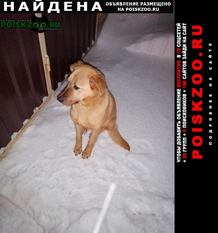 Найдена собака рыжая девочка в районе дер. дубининское Сергиев Посад
