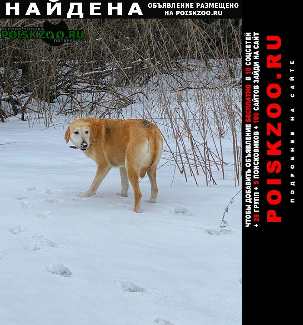 Найдена собака русская гончая Таруса