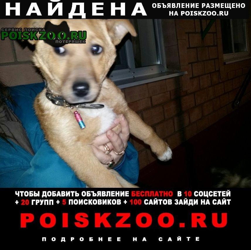 Найдена собака мама, найди меня Луганск