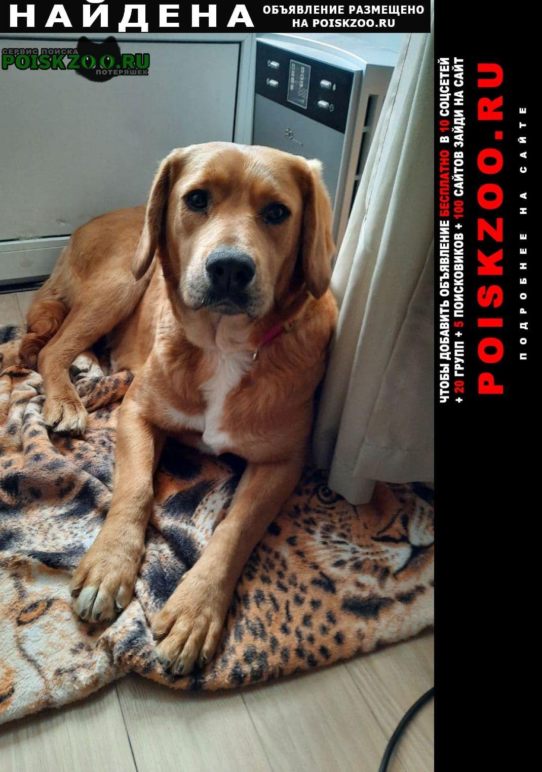 Найдена собака Томилино