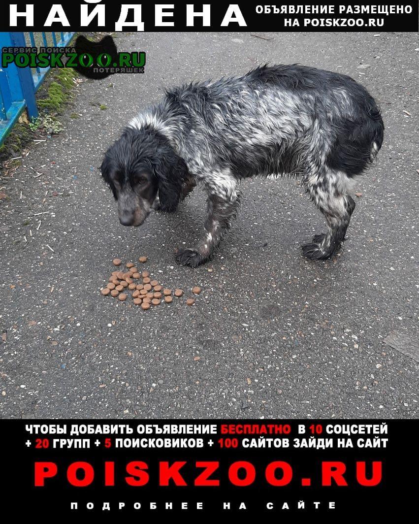 Найдена собака потеряшка Краснодар