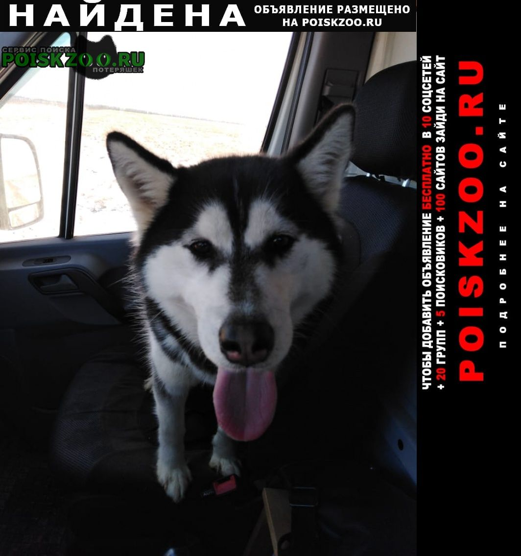 Найдена собака Великий Новгород (Новгород)