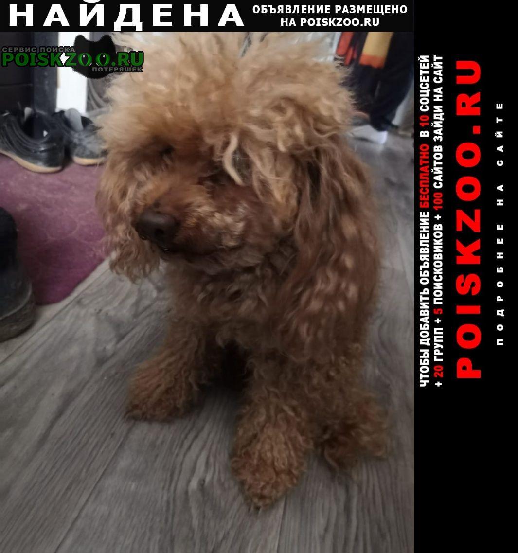 Найдена собака кобель красноармейский р-он Волгоград