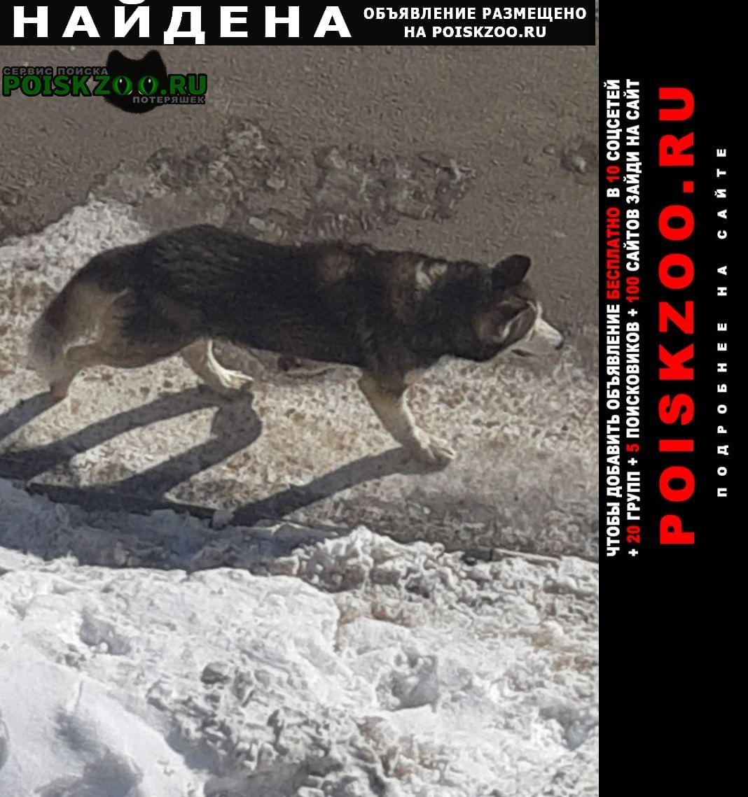 Найдена собака кобель замечена Подольск