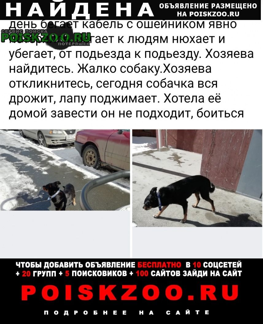 Найдена собака кобель Челябинск