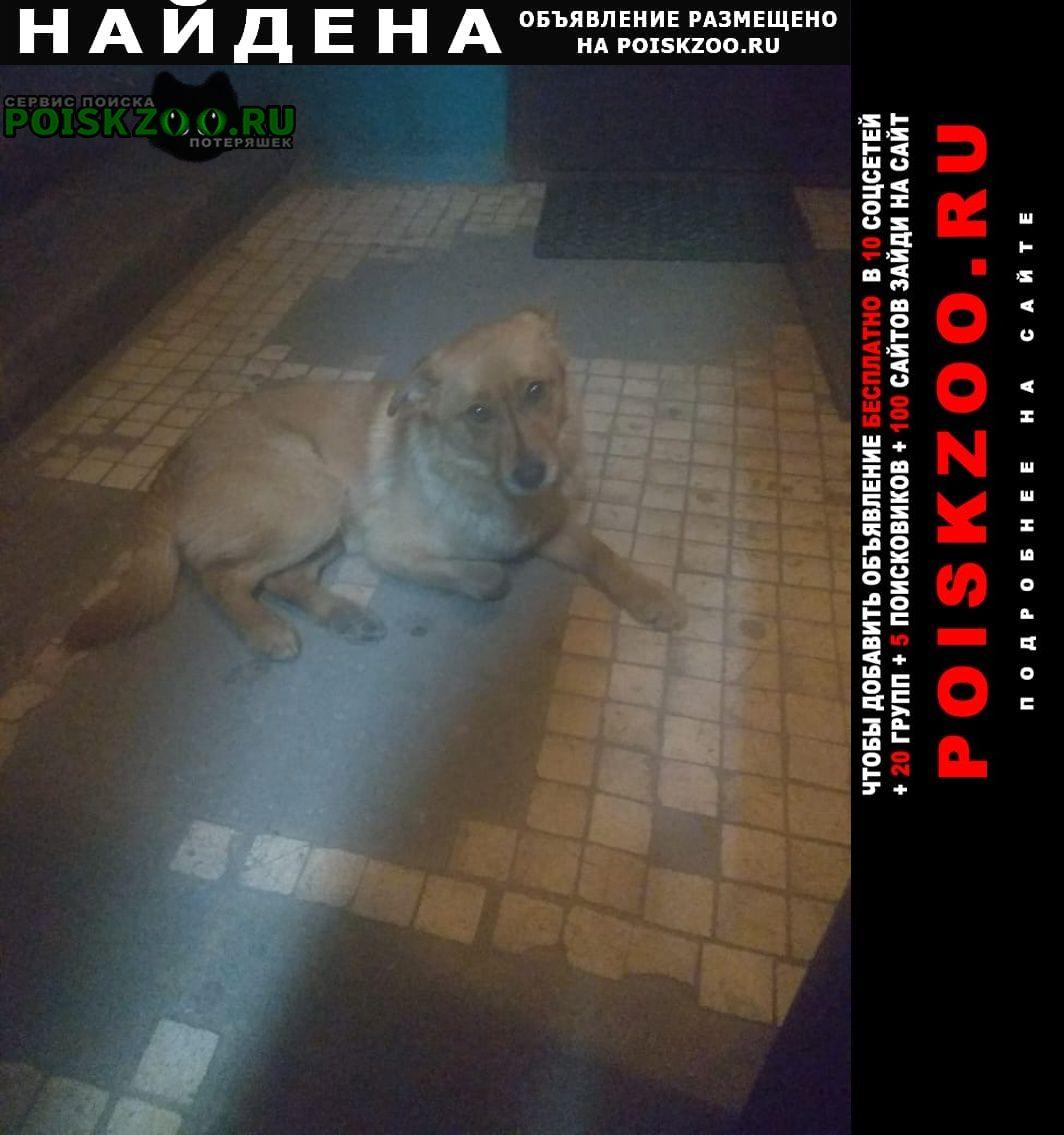 Найдена собака Электроугли