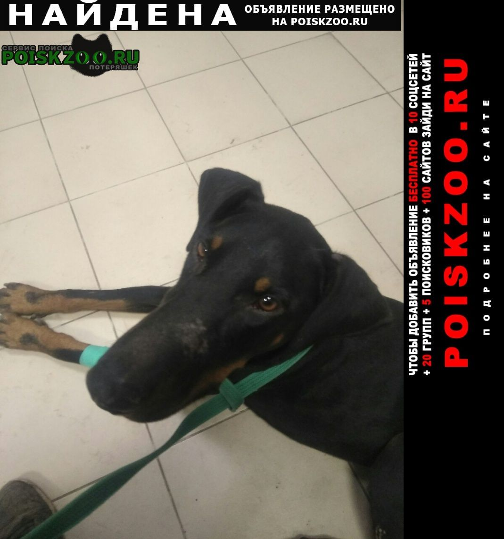 Найдена собака кобель доберман, район кгик Краснодар