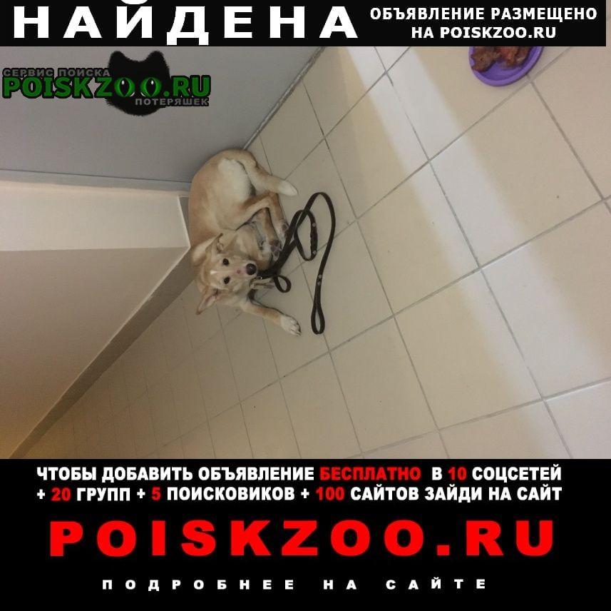 Найдена собака бегала с поводком Челябинск