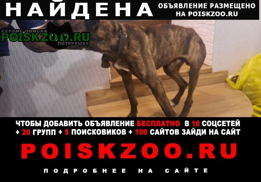 Найдена собака кобель ищем хозяина Иваново