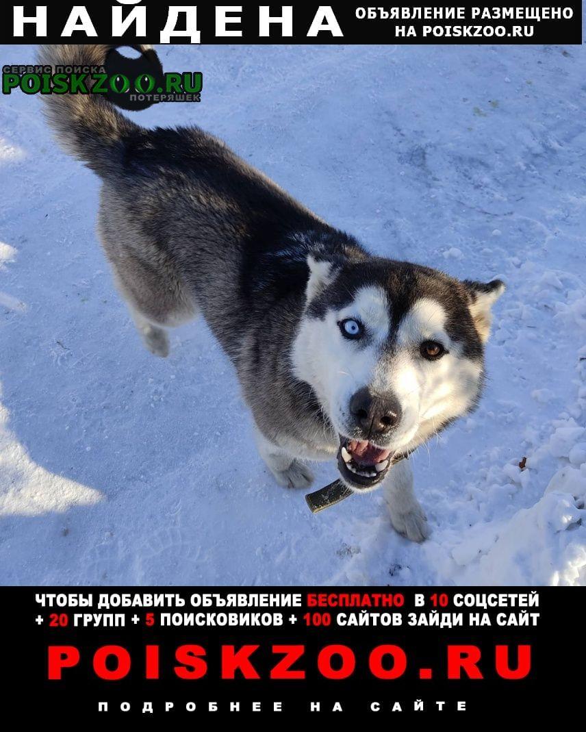 Найдена собака потеряшка ищет хозяина Челябинск