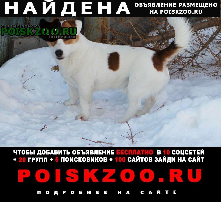 Найдена собака кобель джек рассел терьер Железнодорожный (Московск.)