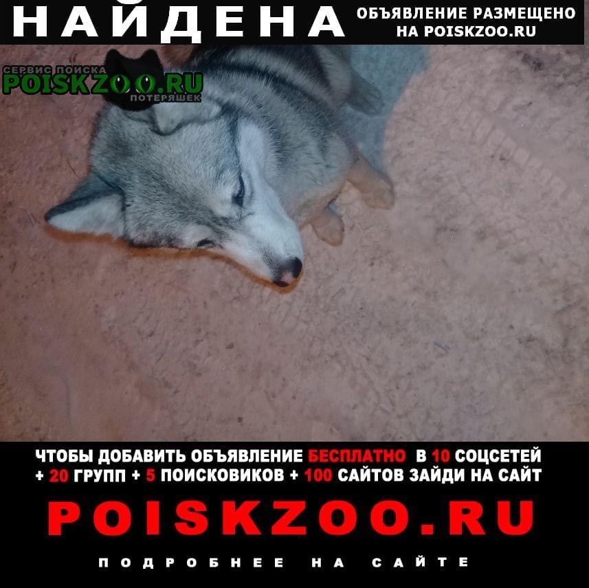 Найдена собака в кировском замечена Казань
