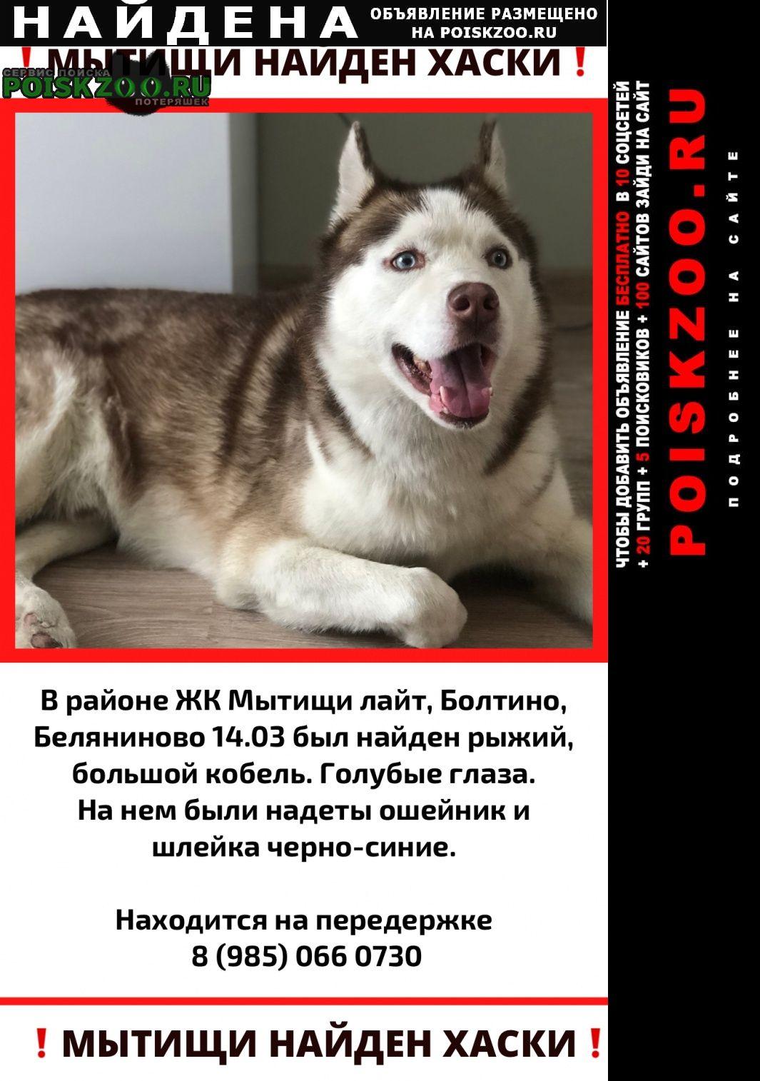 Найдена собака кобель Мытищи