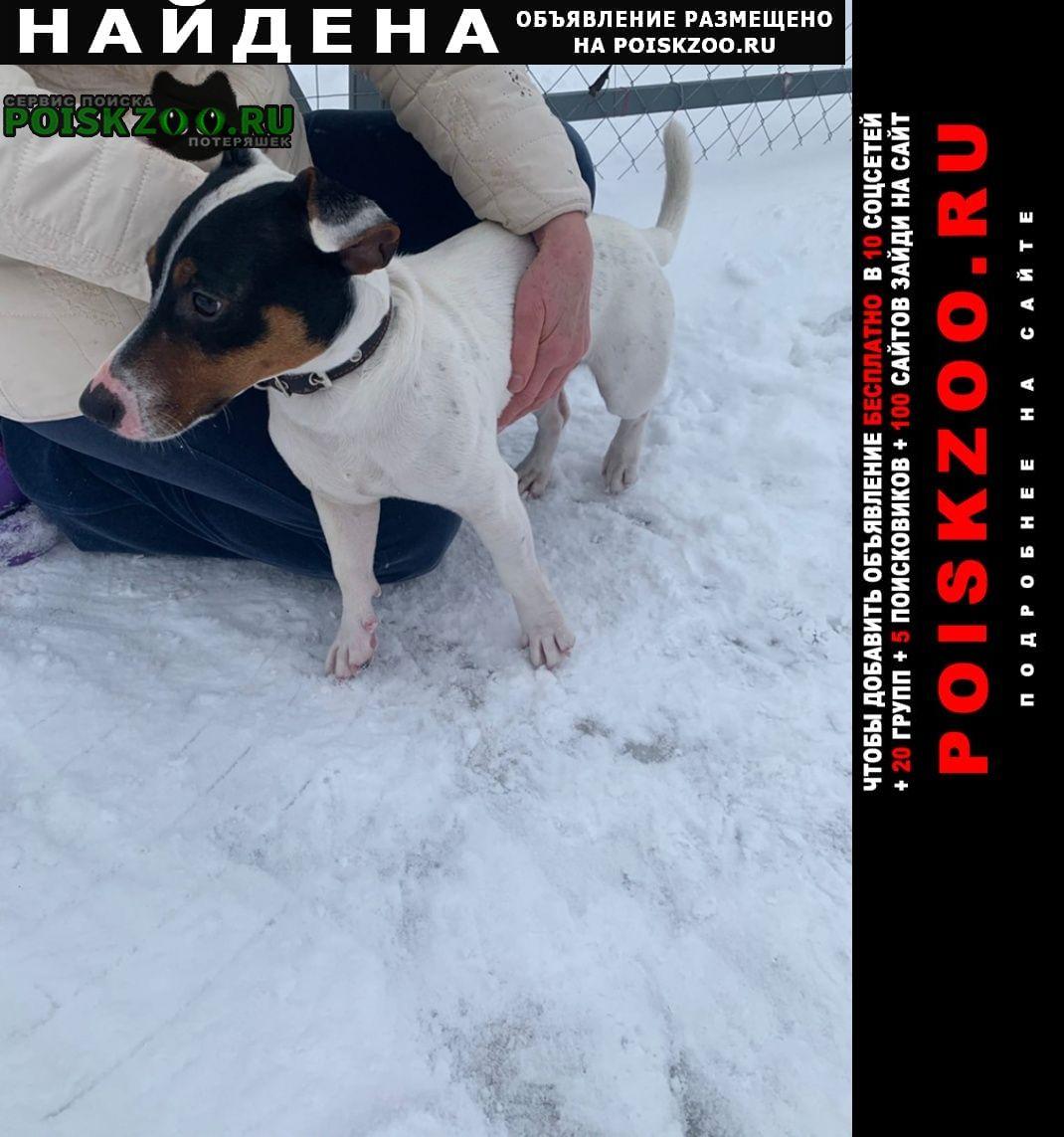 Найдена собака кобель Тула