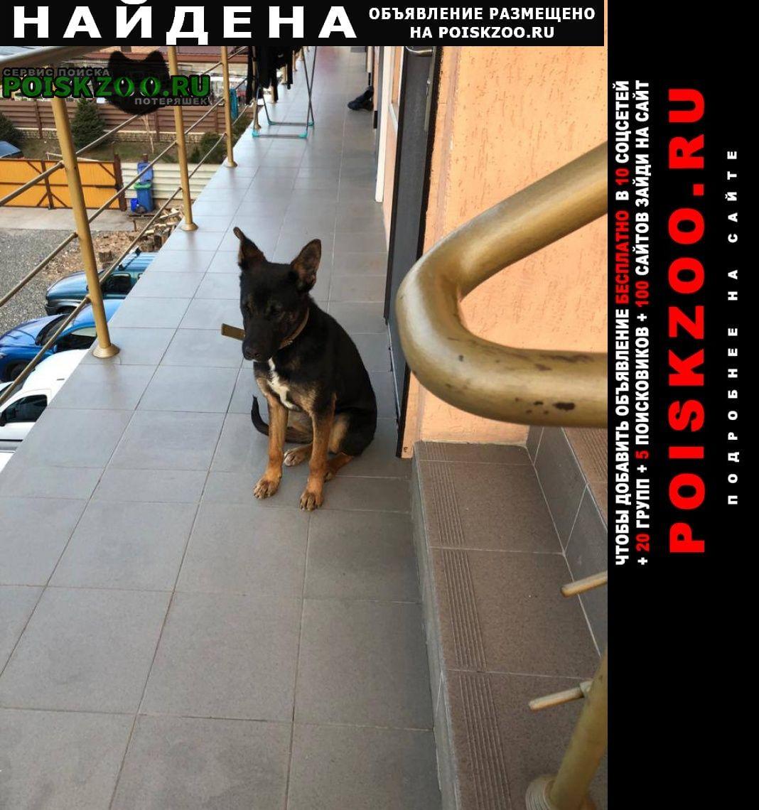 Найдена собака кобель Адлер