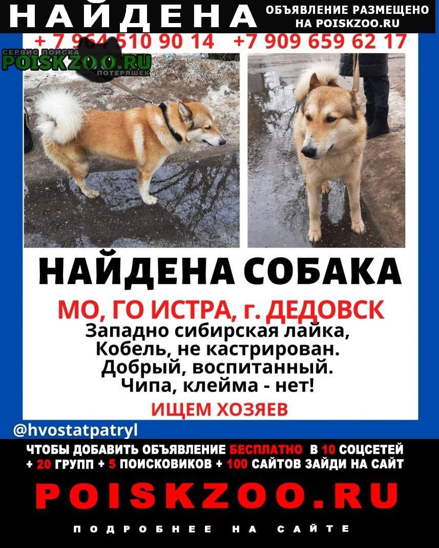 Найдена собака кобель зсл Дедовск
