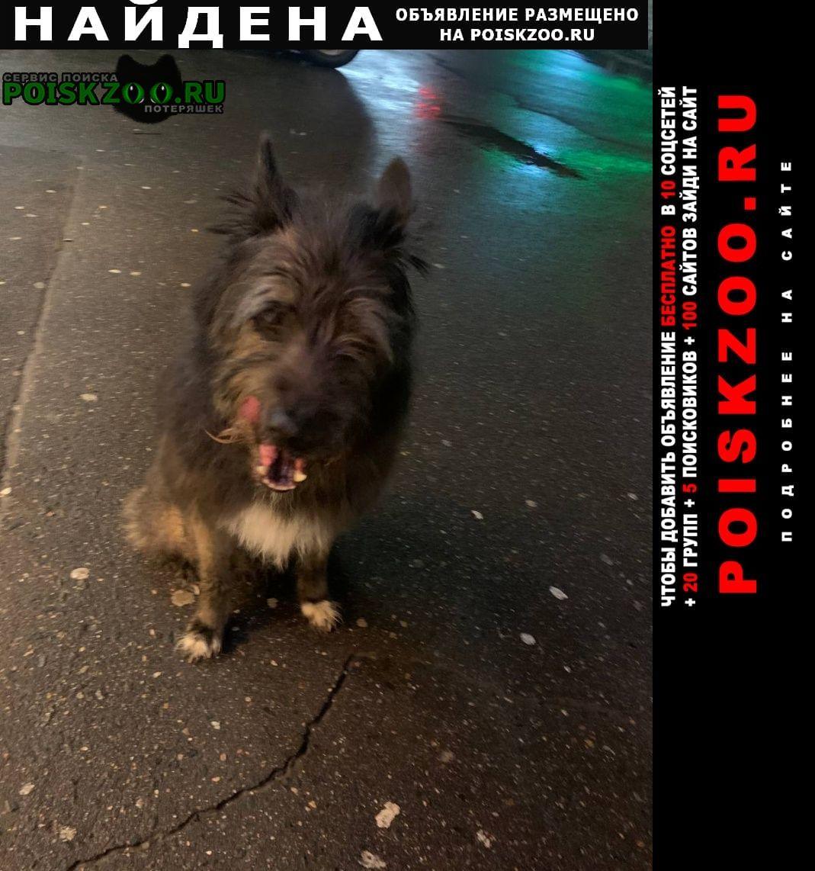 Найдена собака кобель ленинский проспект 101 Москва