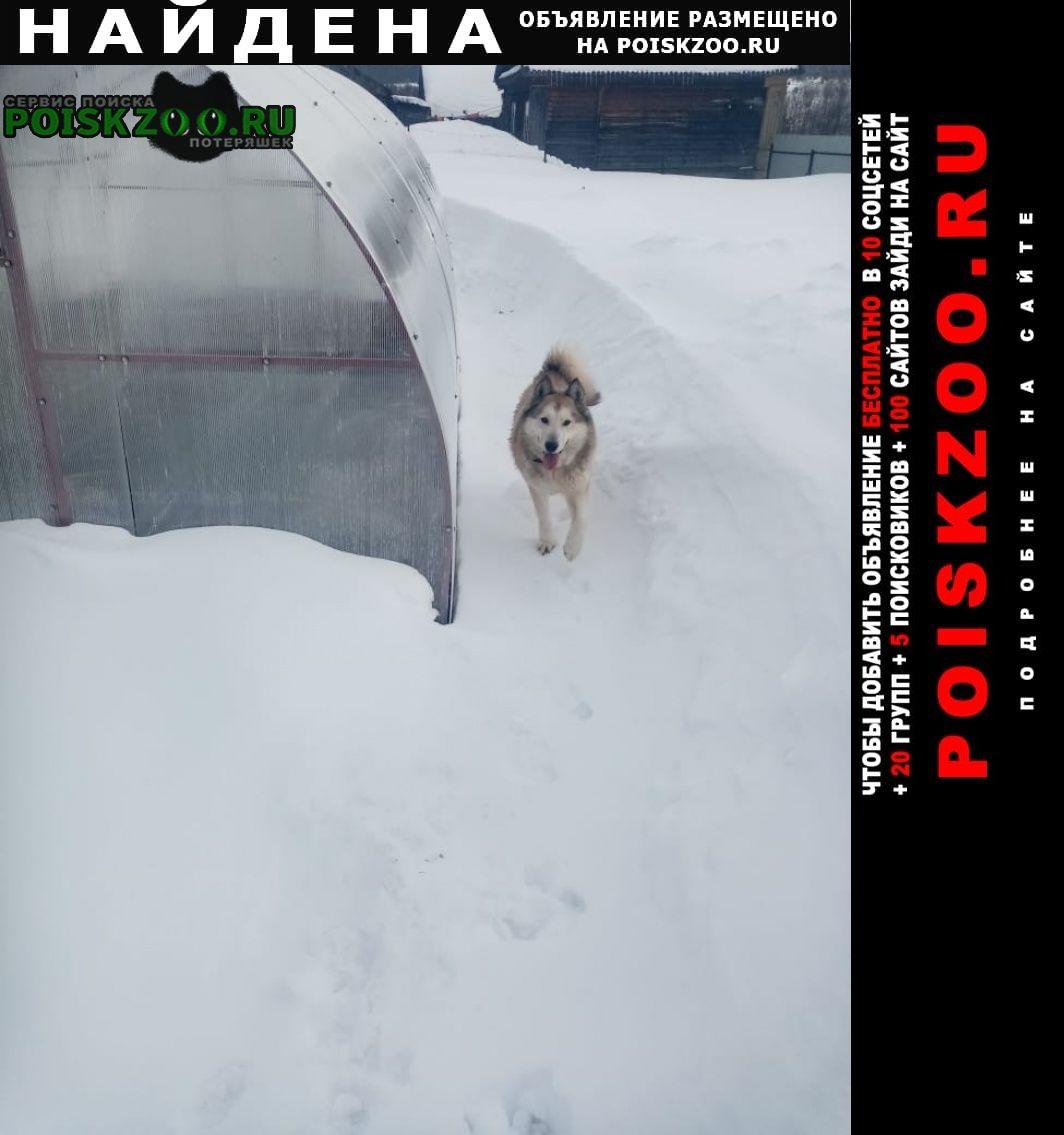 Найдена собака кобель Мариинский Посад