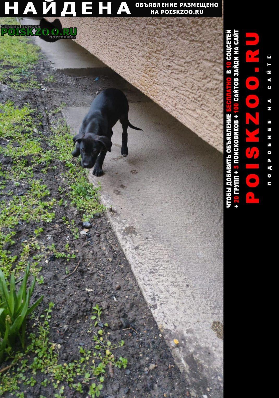 Найдена собака кобель щенок Новороссийск