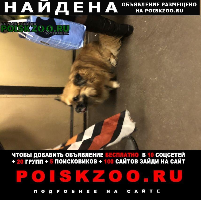 Найдена собака кобель в метро Москва