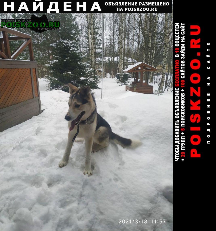 Найдена собака кобель касимово агалатово Сертолово