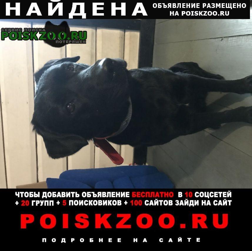 Найдена собака Голицыно (Московская обл.)