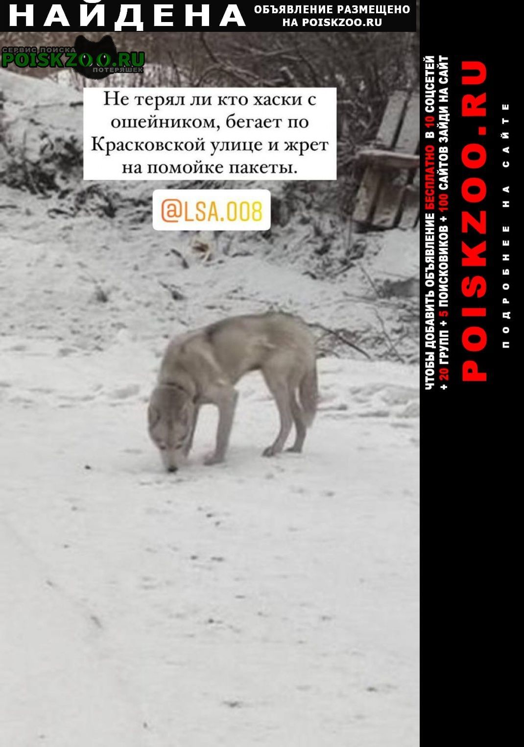 Найдена собака кобель обнаружен хаски Москва