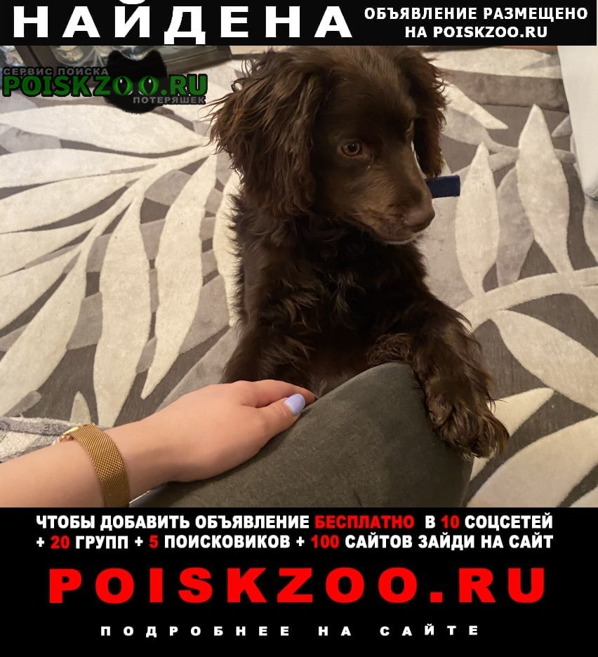 Найдена собака нашли в районе слепого перекрёстка Арзамас