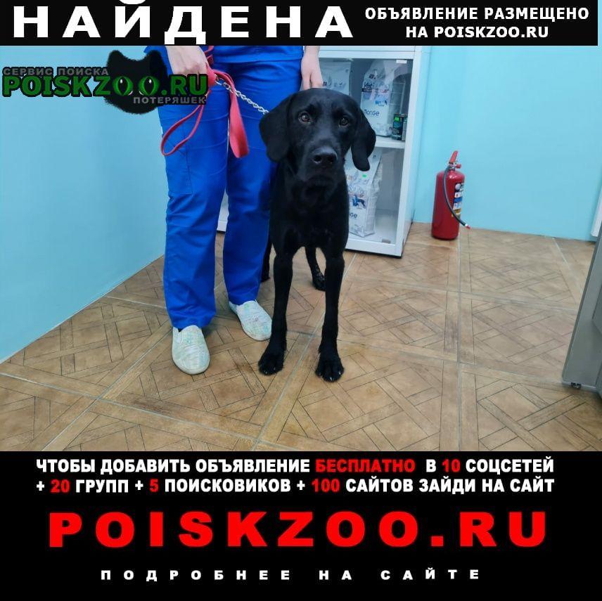 Найдена собака кобель приморский район Санкт-Петербург