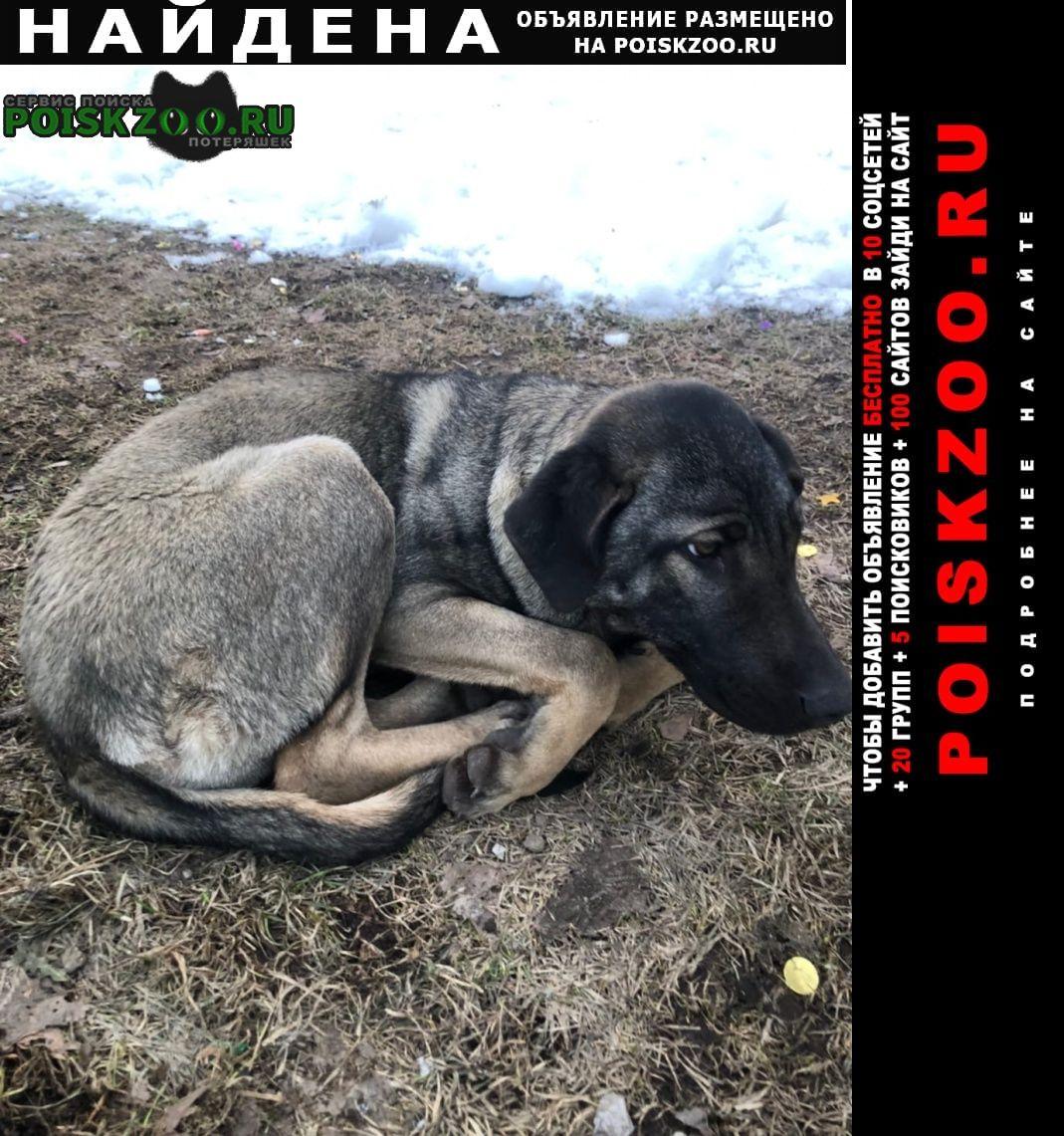 Найдена собака, в ошейнике. Москва
