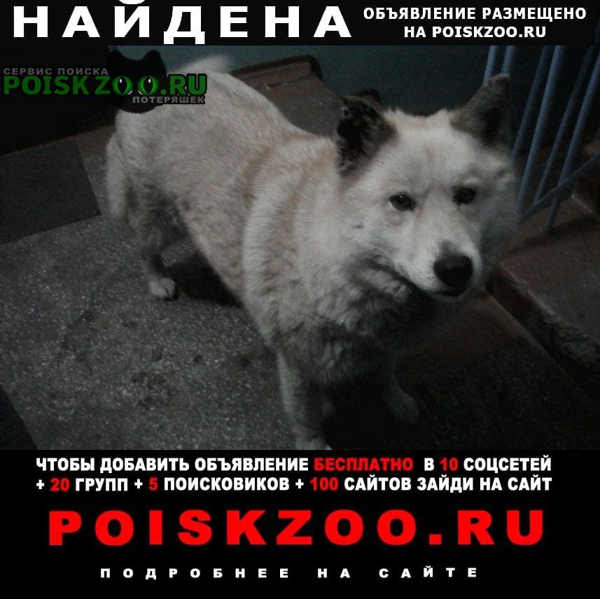 Найдена собака скорее всего домашняя. Абакан Хакасия
