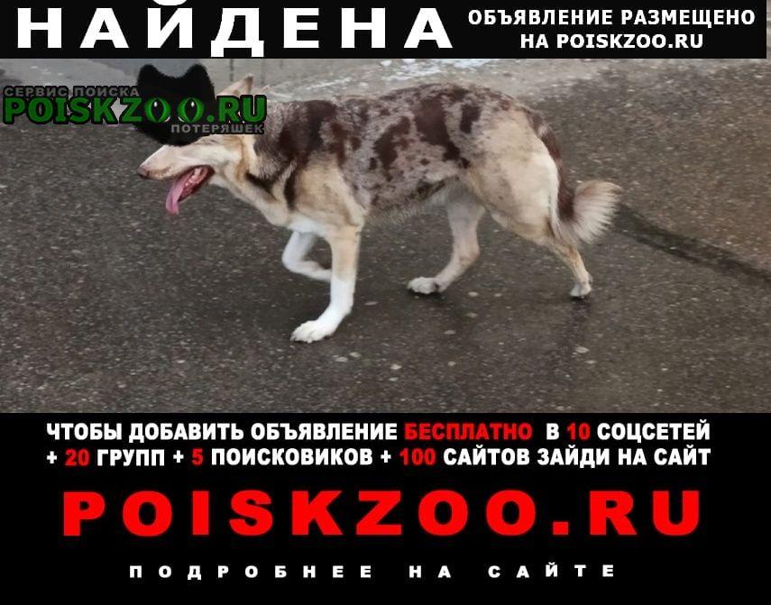 Найдена собака Санкт-Петербург