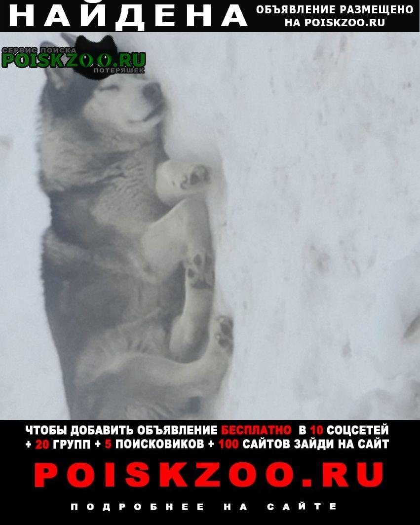 Найдена собака Сургут