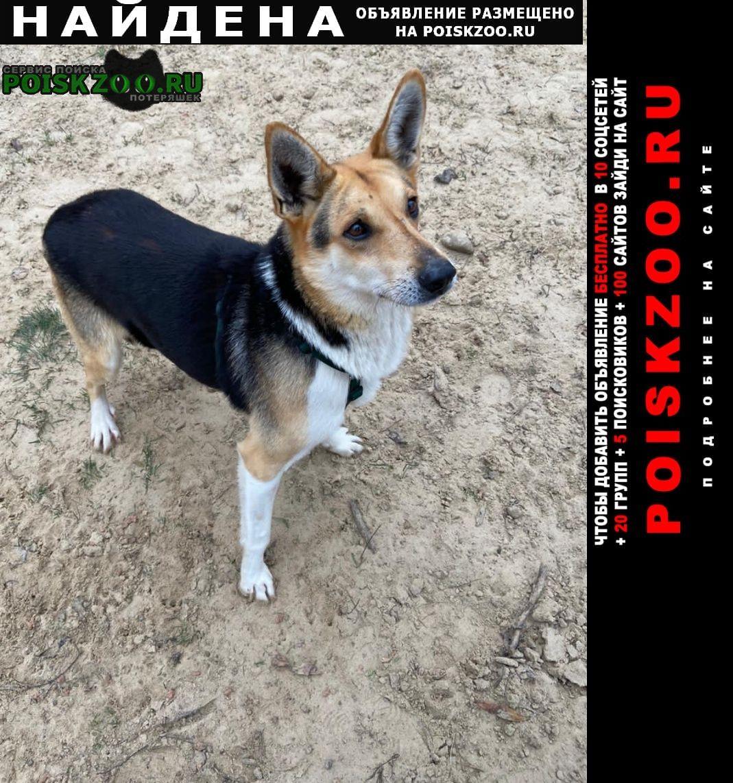 Найдена собака кобель Серпухов