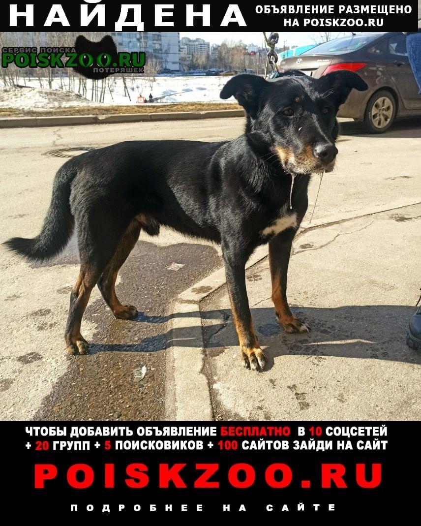 Найдена собака кобель черная собака сегодня Москва