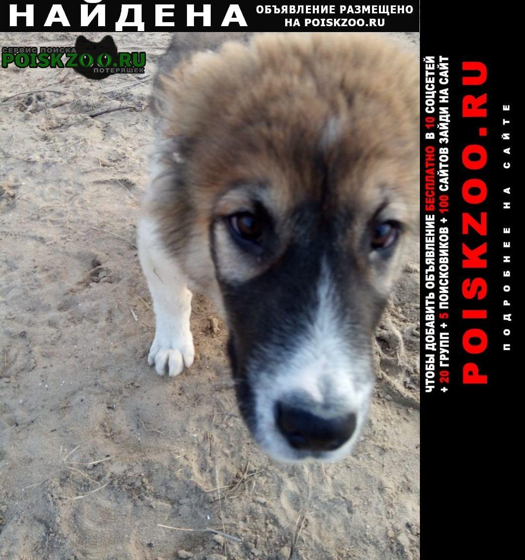 Найдена собака кобель щенок породы алабай. Воронеж