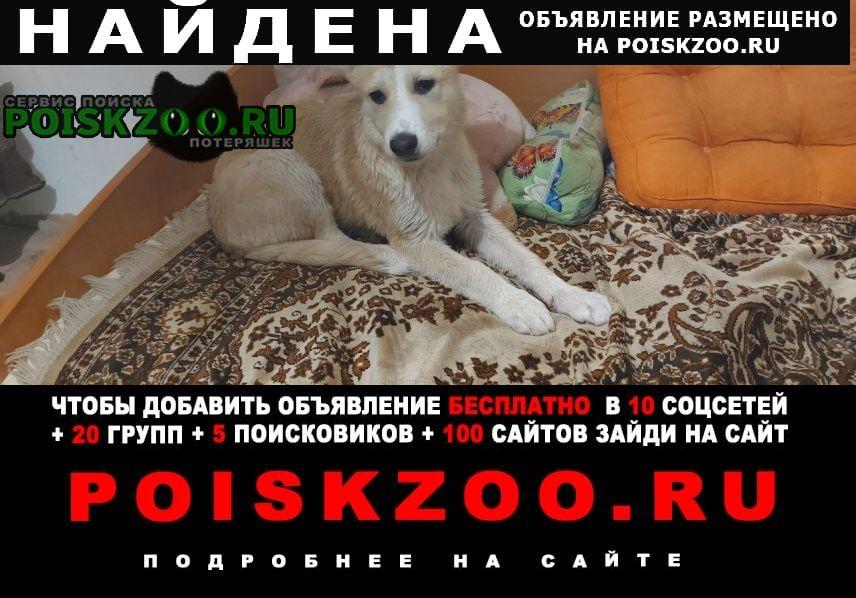 Найдена собака кобель Ижевск
