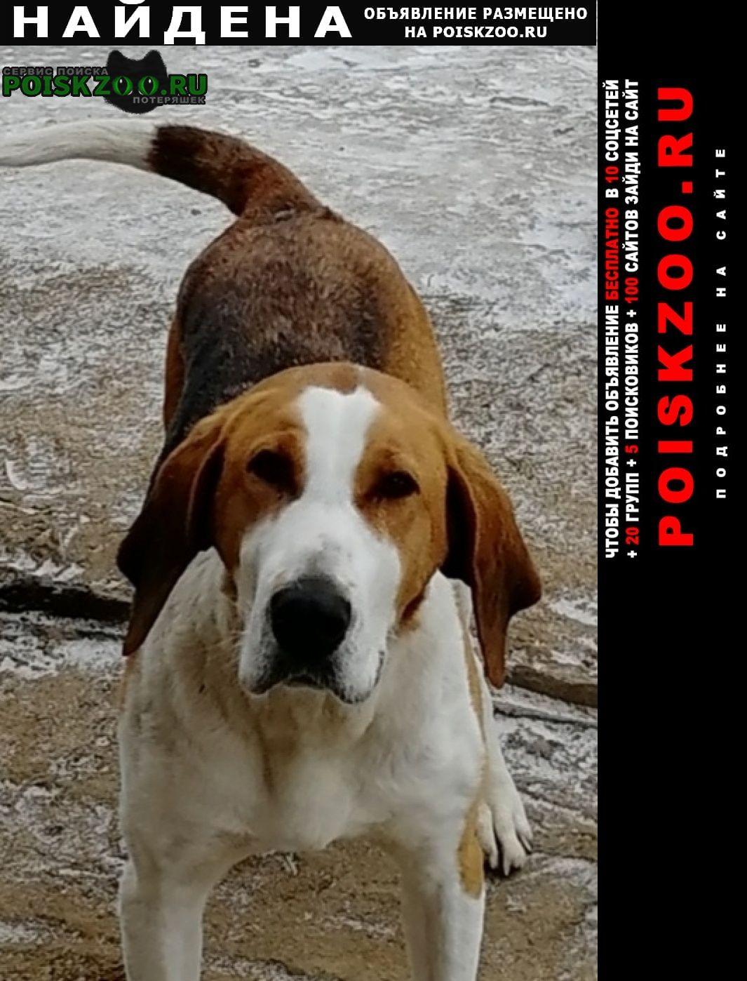 Найдена собака Тверь