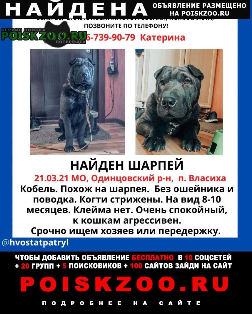 Найдена собака кобель шарпей Одинцово