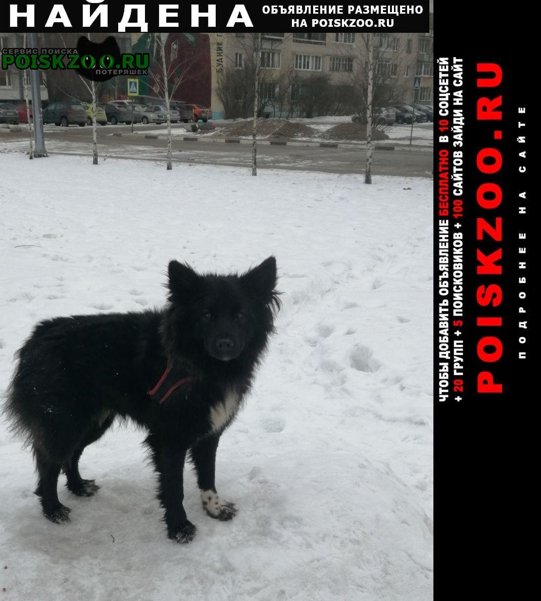 Найдена собака потеряшка в красно чёрной шлейке Лобня