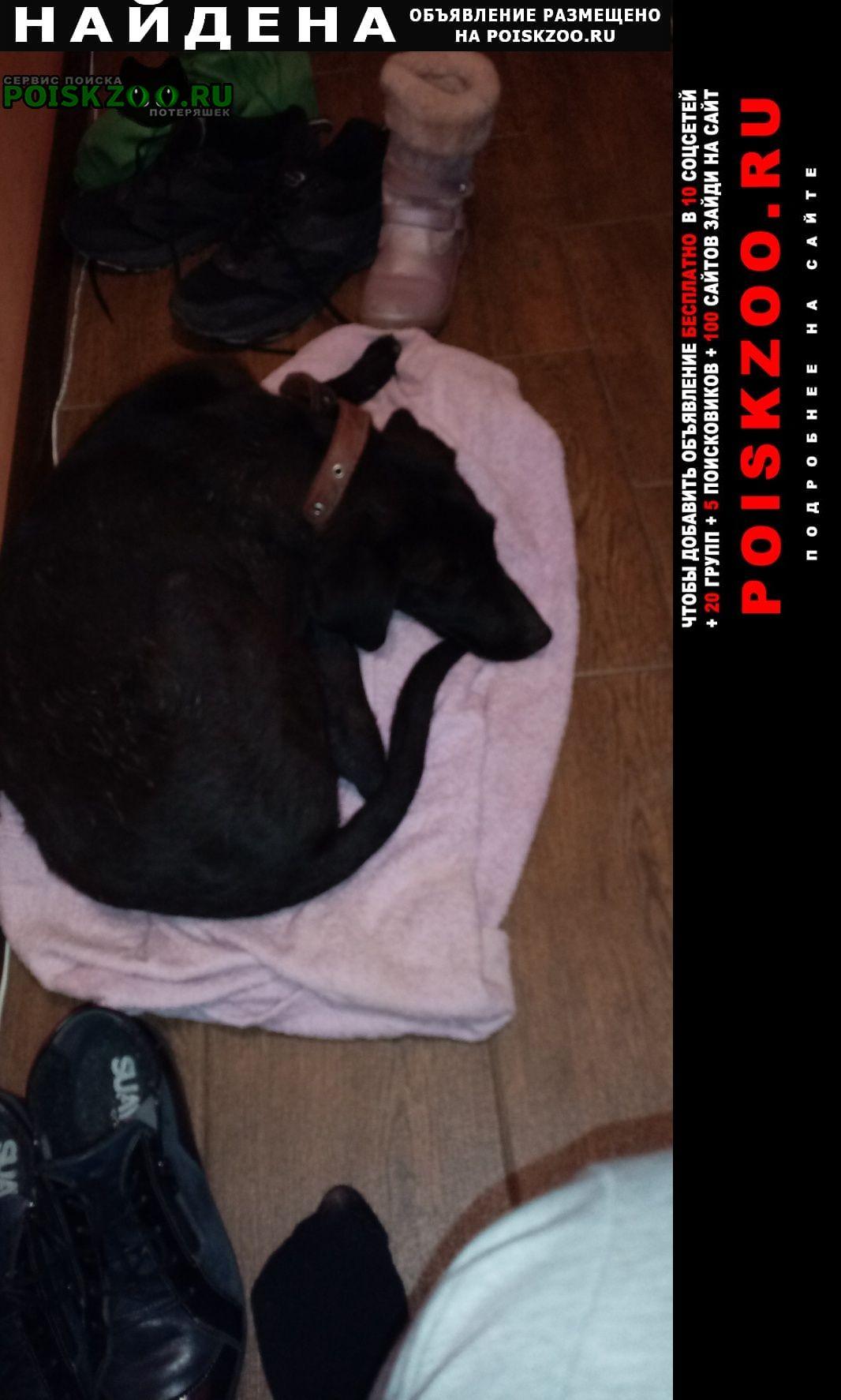 Найдена собака чёрная Батайск
