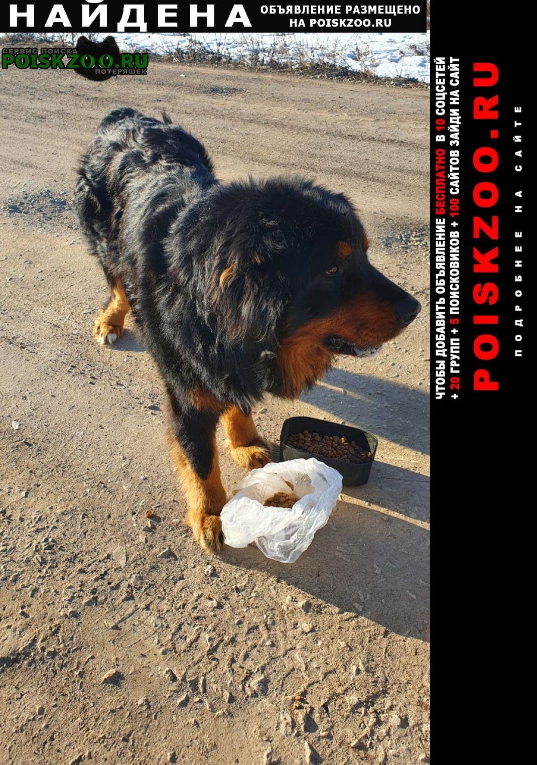 Найдена собака кобель большой, приветливый, молодой Дубна (Тульская обл.)
