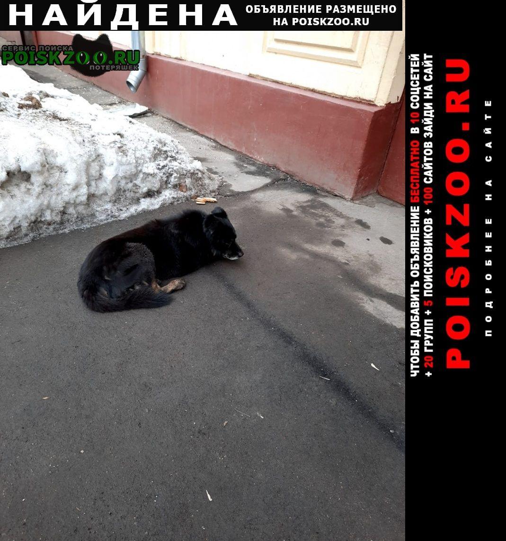 Найдена собака грустит одна у подъезда Москва