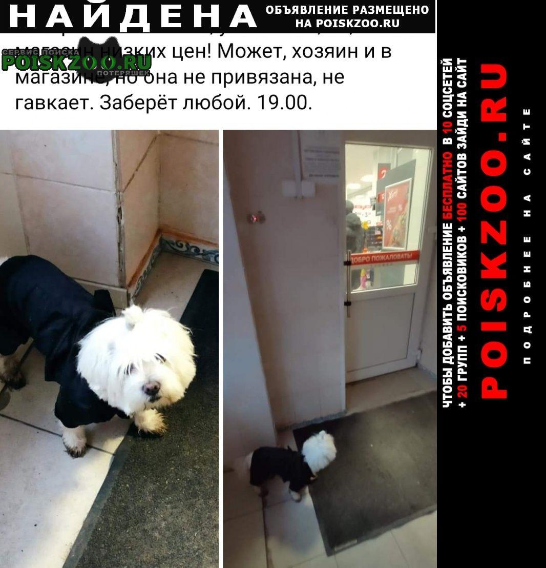 Найдена собака потеряшка Витебск