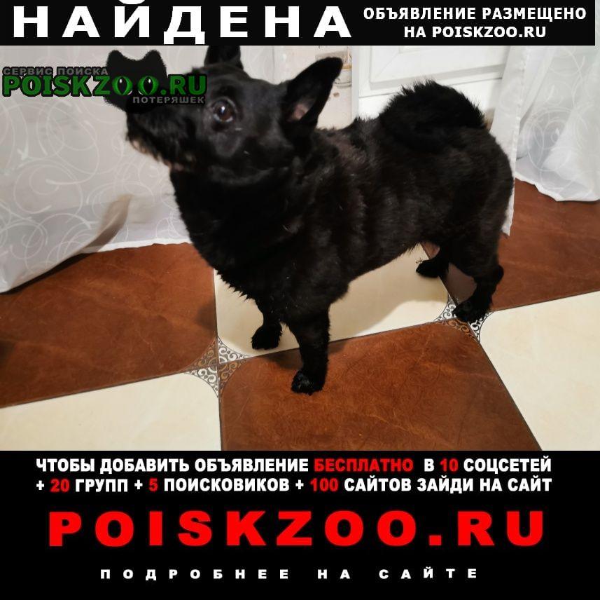 Найдена собака кобель черная собака Екатеринбург