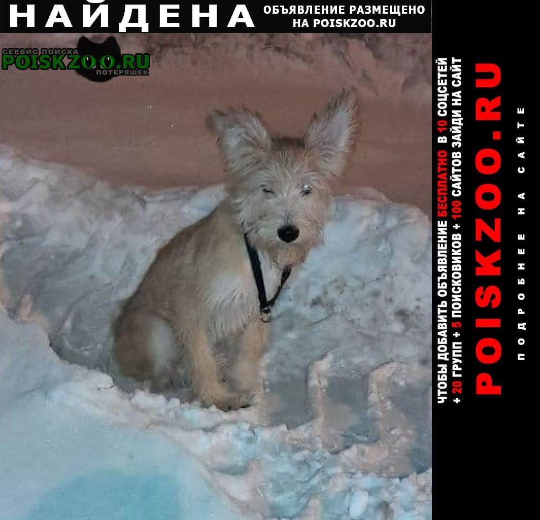 Найдена собака Новый Уренгой
