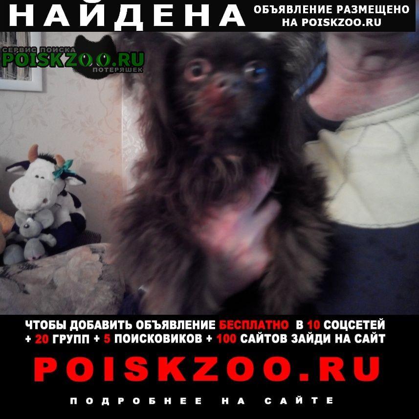 Найдена собака кобель Санкт-Петербург