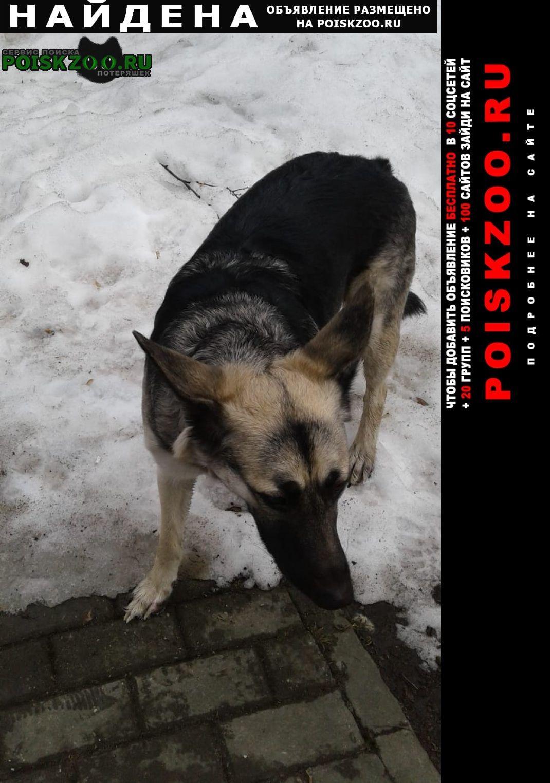 Найдена собака овчарка сука Москва