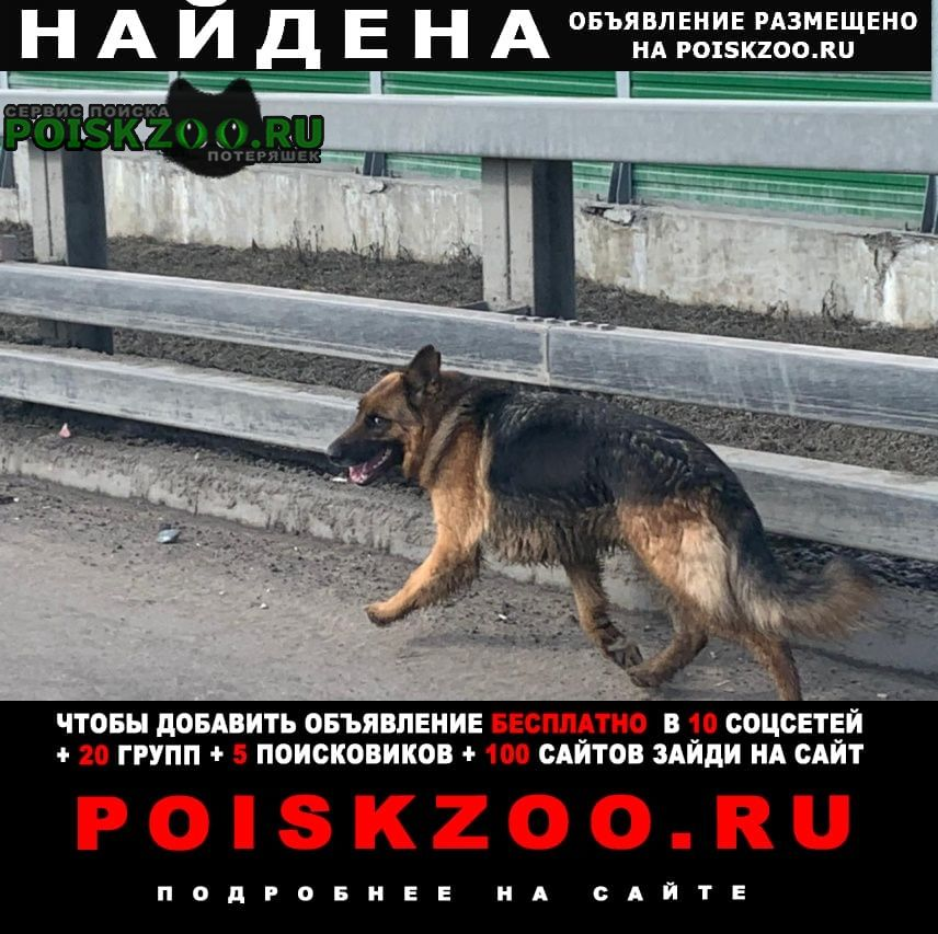 Найдена собака возле трассы Лесной Городок
