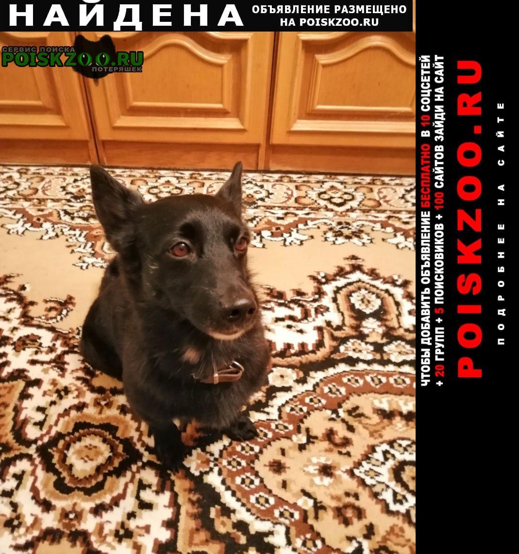 Найдена собака кобель пёс ищет хозяина Красноярск